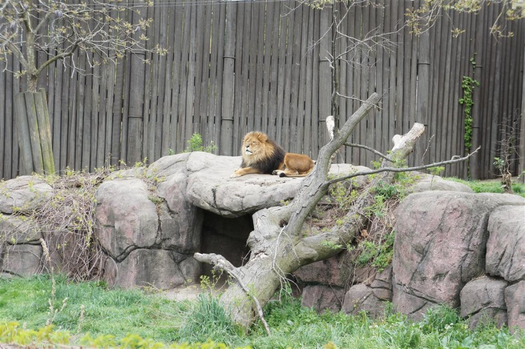 120422-Earthfest-Lion