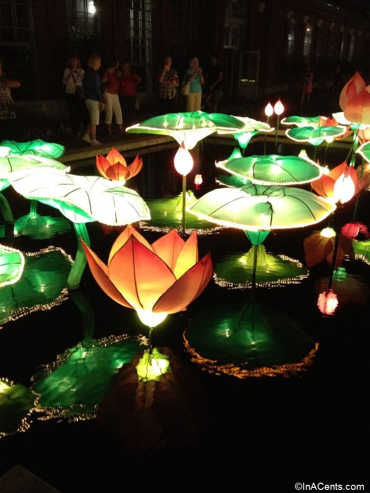 03-Missouri Botanical Gardens Japanese Lanterns Lotus Flower