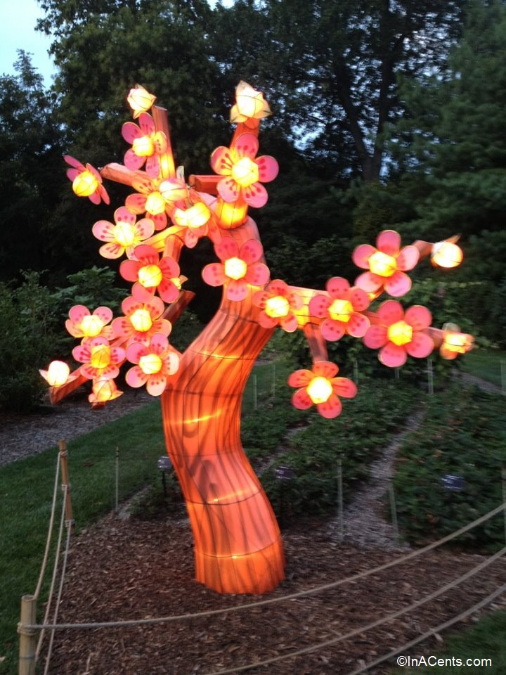 20-Missouri Botanical Gardens Japanese Lanterns Cherry Blossom
