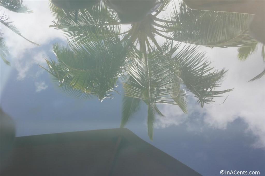 120625 Disney's Aulani Palm Reflection