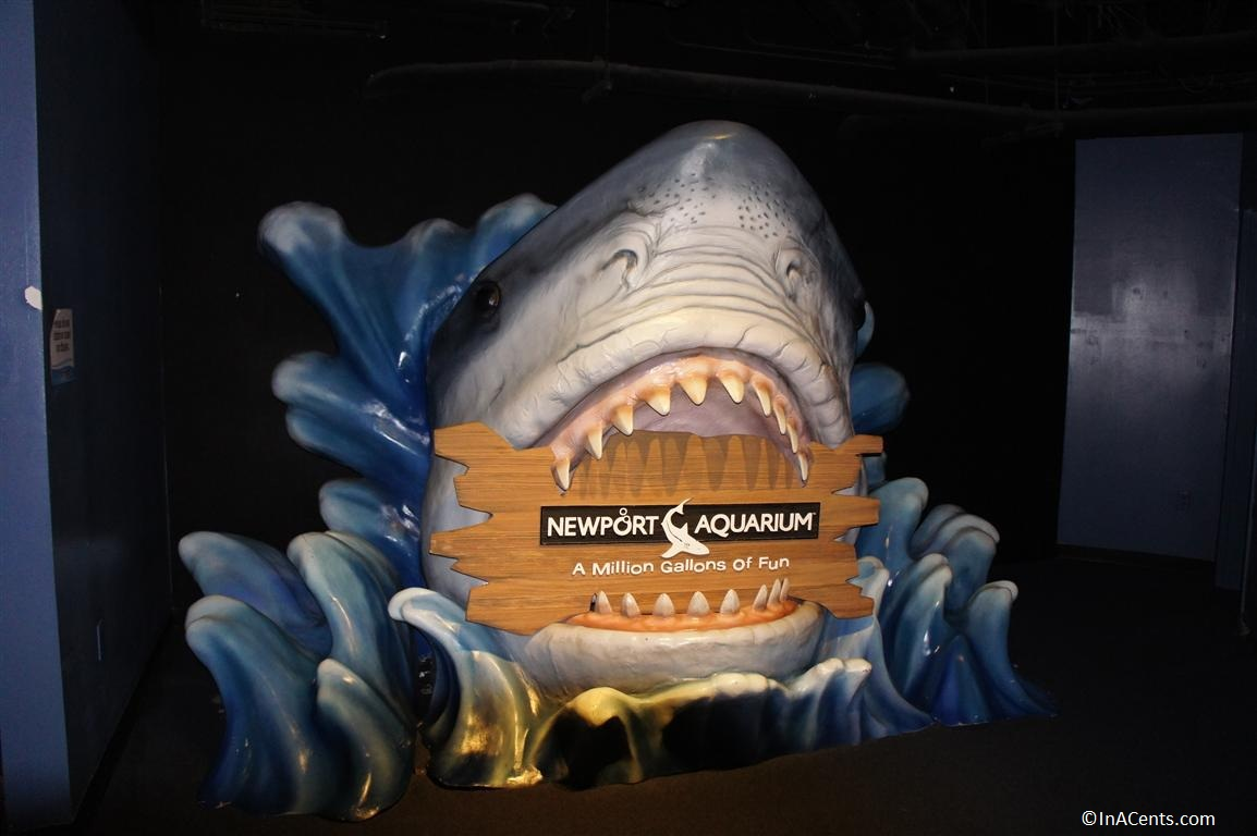 Newport Aquarium Discount Tickets Newport Aquarium Party