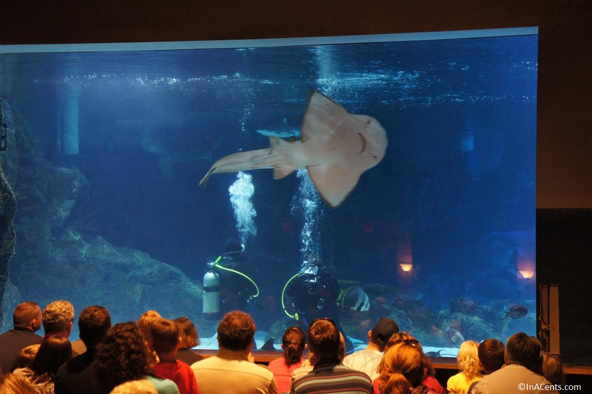 a day at the newport aquarium with kids
