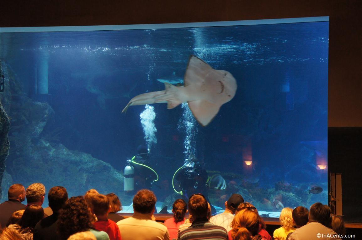 Newport Aquarium Discount Tickets Kroger