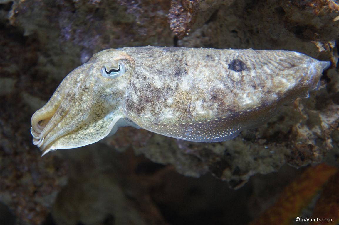 Newport Kentucky Aquarium Coupons