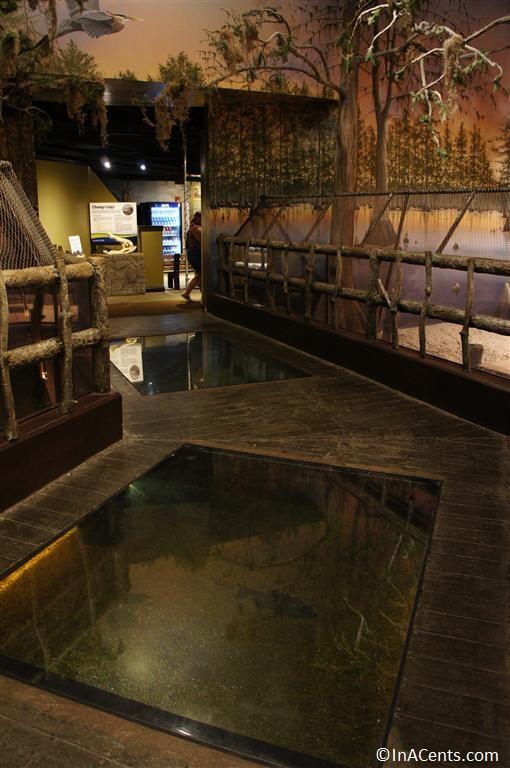 Newport Aquarium Alligator
