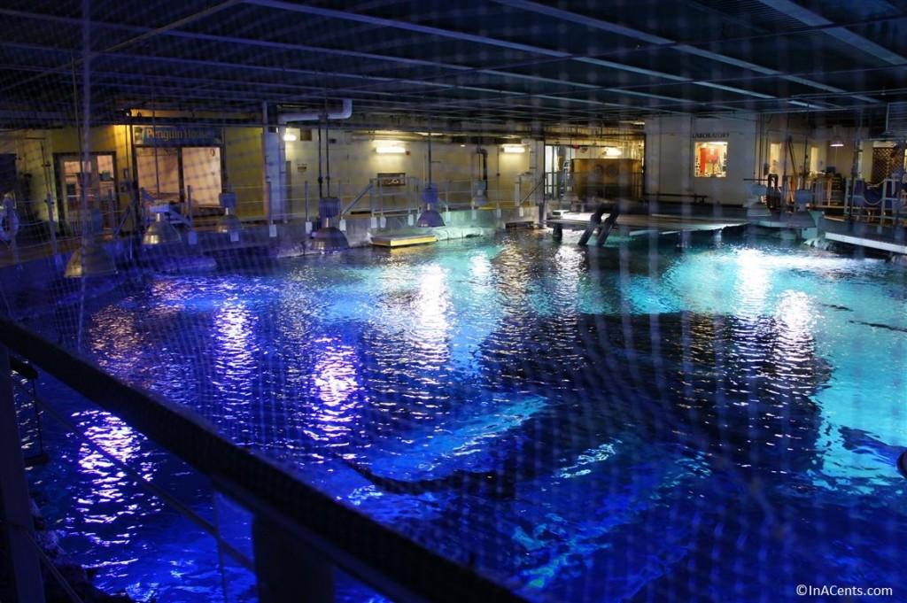 A Day At The Newport Aquarium With Kids Inacents Com