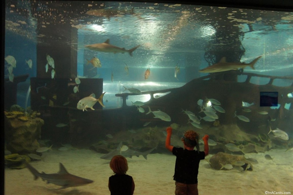 Review Greater Cleveland Aquarium