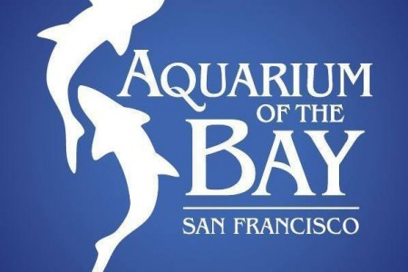 Review: Aquarium of the Bay