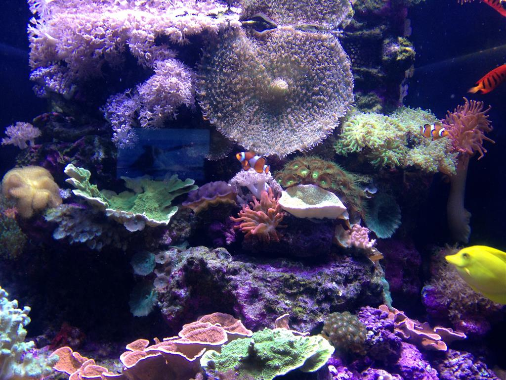 140216 Aquarium of the Bays Corals