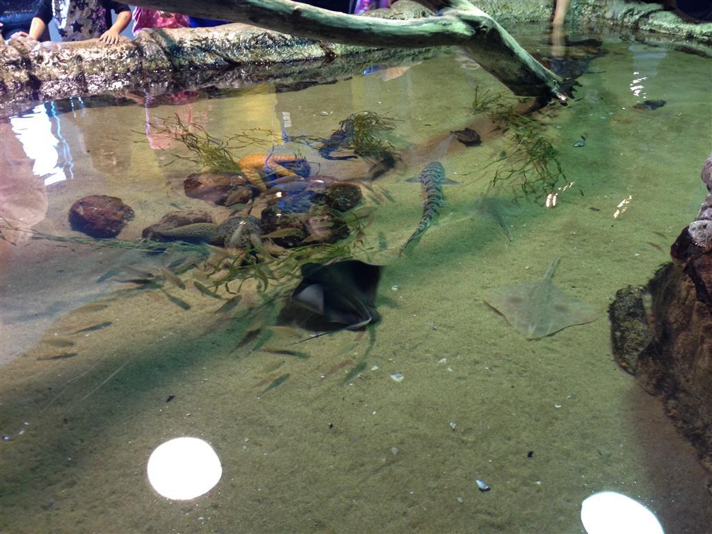 140216 Aquarium of the Bays Touch tank