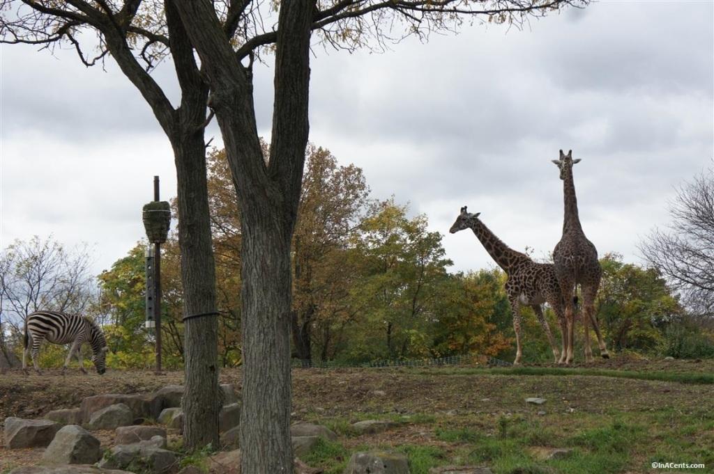 141018 Pittsburgh Zoo Boo