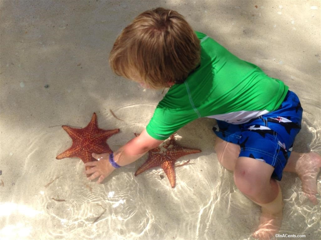 150702 Starfish Point, Grand Cayman with Kids
