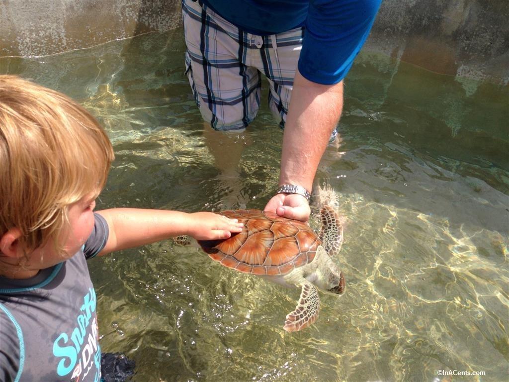 150703 Turtle Farm, Grand Cayman with Kids