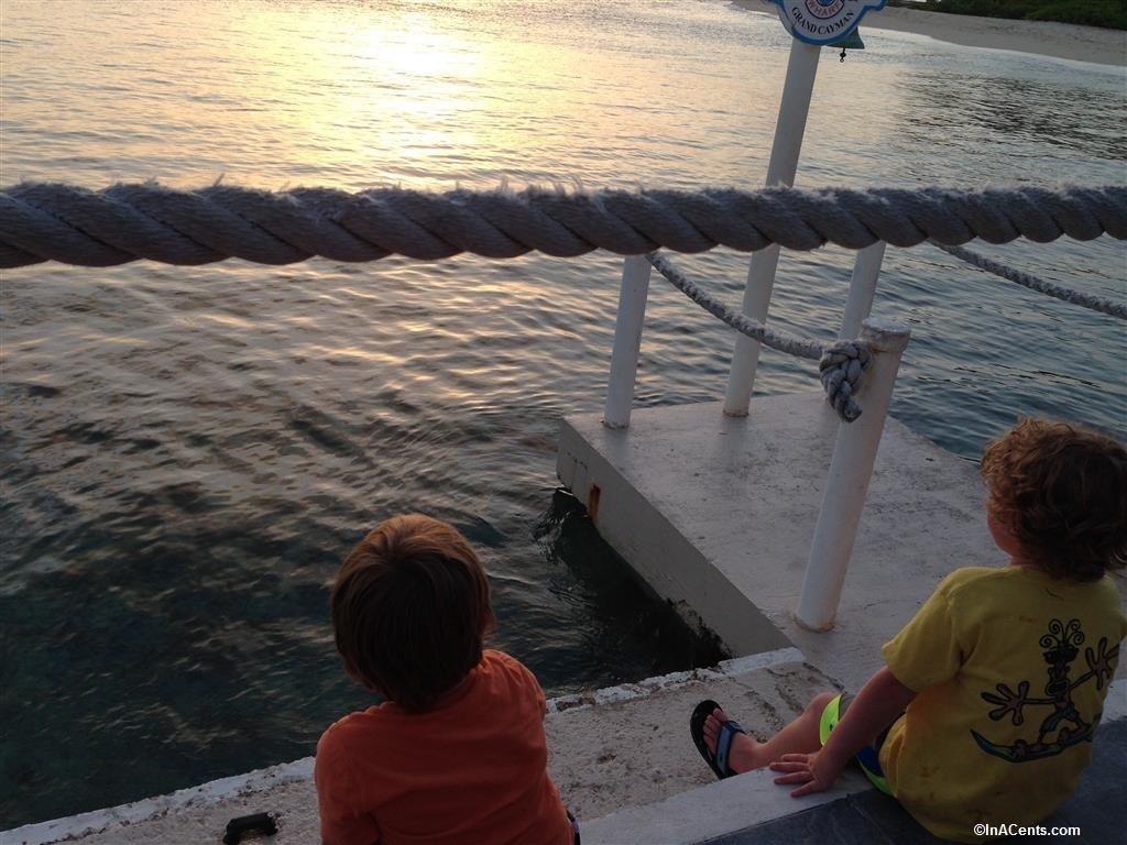 150704 The Wharf Tarpon, Grand Cayman with Kids