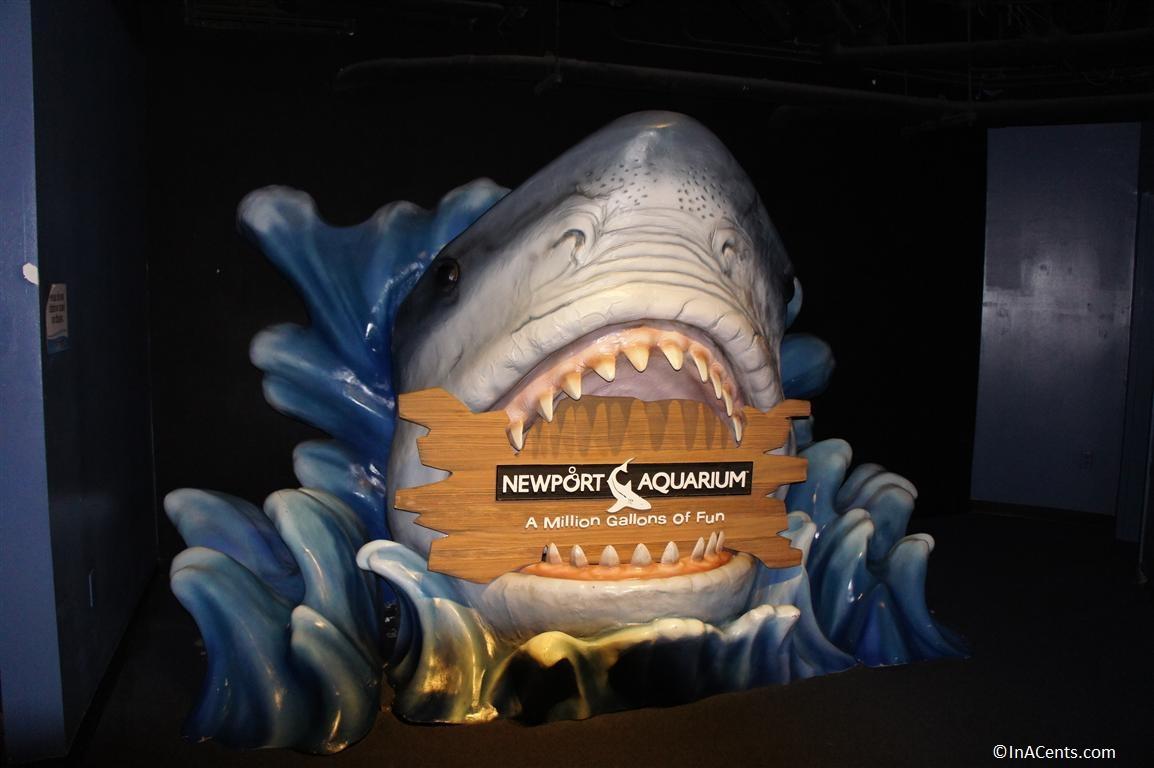 Newport Aquarium Winter Family Day Tickets Inacents Com